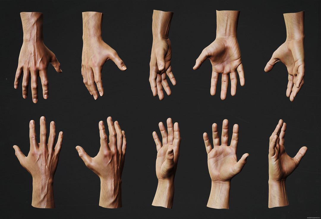 Andor Kollar Hand Anatomy Study in ZBrush